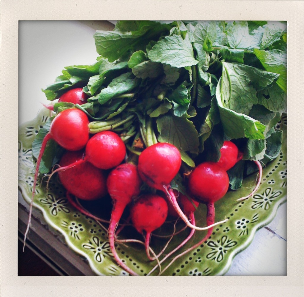 Don't throw out those tops! Barbara Sinclair radishes delight