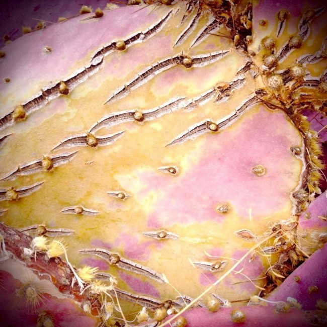 Barbara Sinclair Blog Ayurveda Art Cactus Close Up