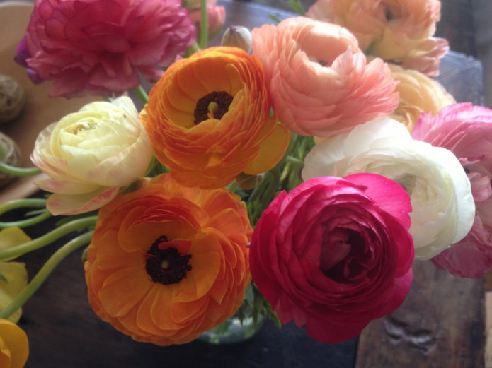 Barbara Sinclair My favorite spring flower the ranunculus. Creativity in Bloom!