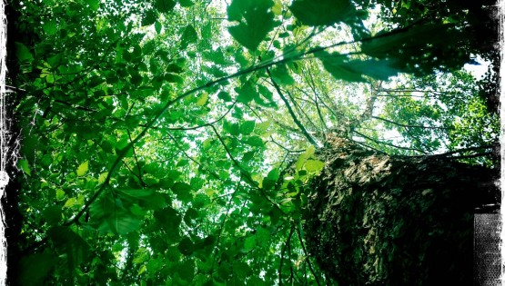 Barbara Sinclair The Not Enough Syndrome Find Mother Nature