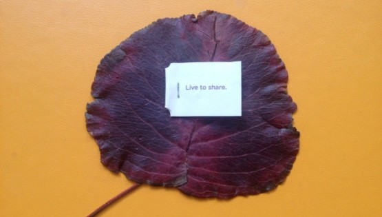 Live to Share Tea Message Myth of Healthy Healer Ayurveda Holistic Health and Healing