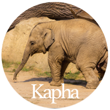 Barbara Sinclair Holistic Health and Healing Kapha Dosha is like an elephant