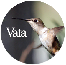 Barbara Sinclair Holistic Health and Healing Vata Dosha is like a hummingbird