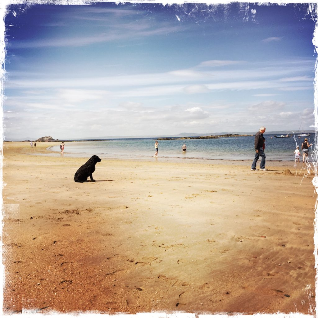 Leaving Expectations Behind, Barbara Sinclair, dog on North Berwick beach