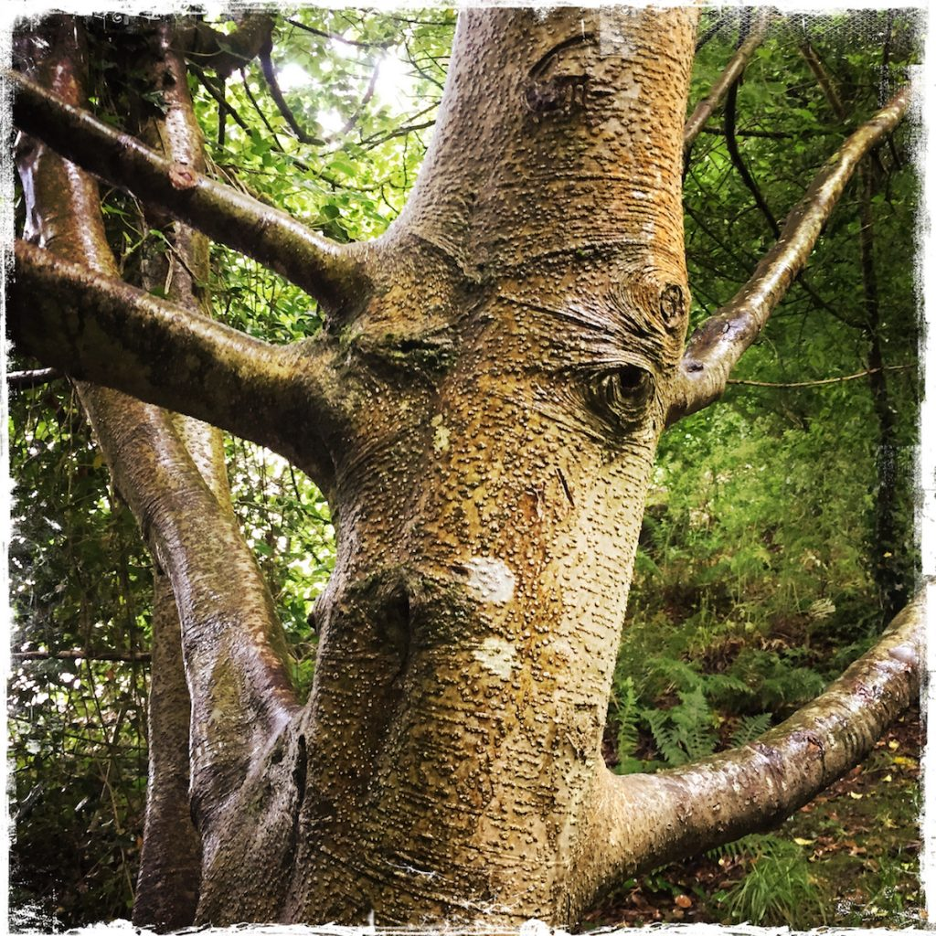 Leaving Expectations Behind, Barbara Sinclair, Tree Spirit, Hazelwood Forest, Ireland