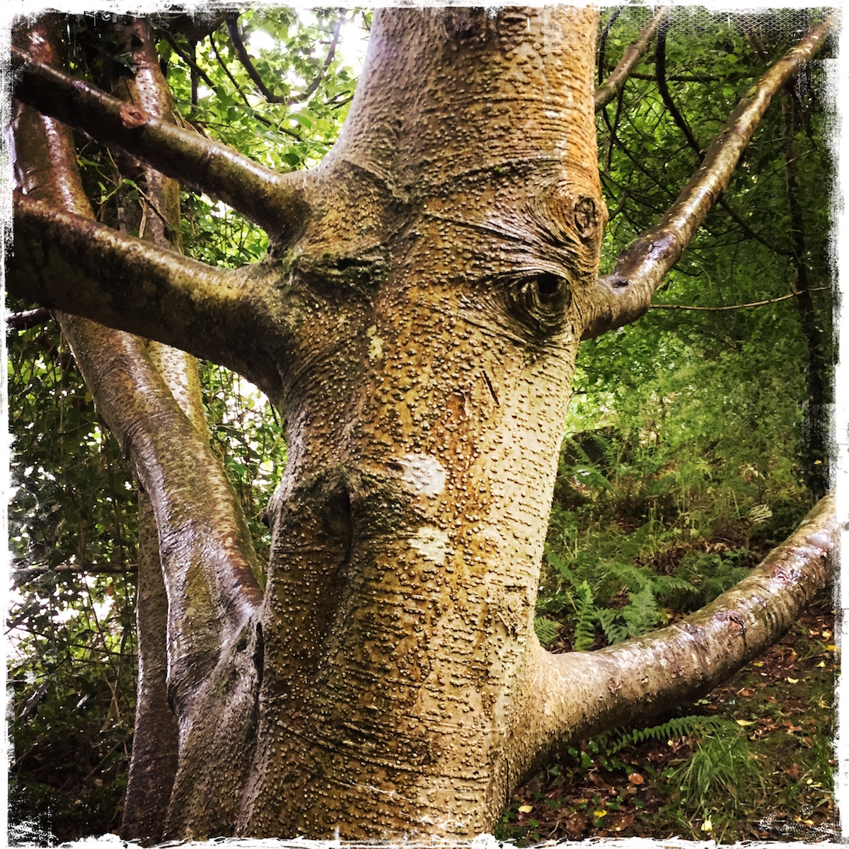 Met this tree friend in the Hazelwood Forest in Ireland. Photo by Barbara Sinclair
