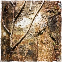 Abstraction in nature - tree trunk. Photo by Barbara Sinclair