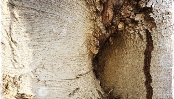 Amazing abstraction in tree trunk. Photo by Barbara Sinclair