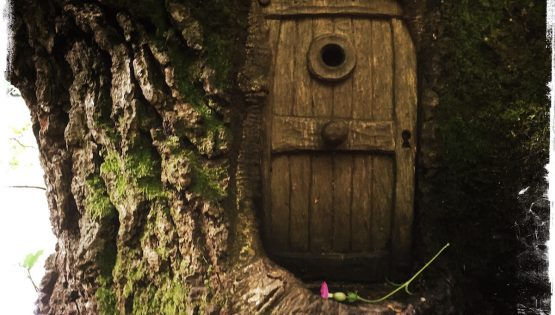 Fairy Door in Forest Scotland by Barbara Sinclair