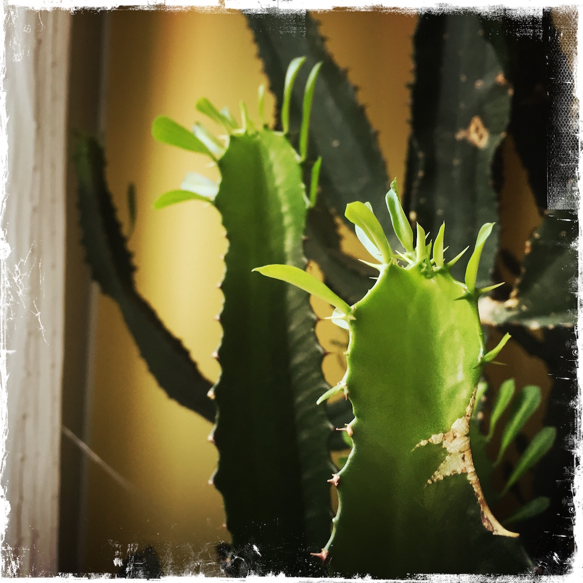 I Kissed My Cactus Today, poetry, Barbara Sinclair