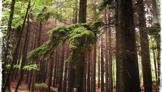 A Lifeline From Our Sisterhood to the Trees, Barbara Sinclair, TreeSisters, Mother Earth, Climate Change, Trees