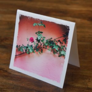 Pink Cottage Ireland Note Card by Barbara Sinclair