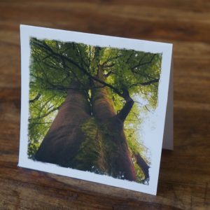 Burren Guardian Tree Greeting Card by Barbara Sinclair