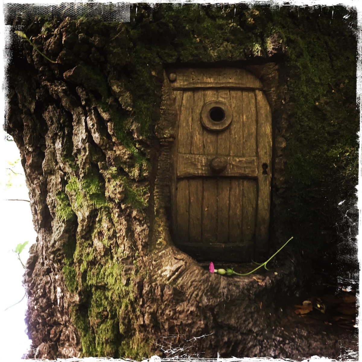 Fairy Door, Scotland, photo by Barbara Sinclair
