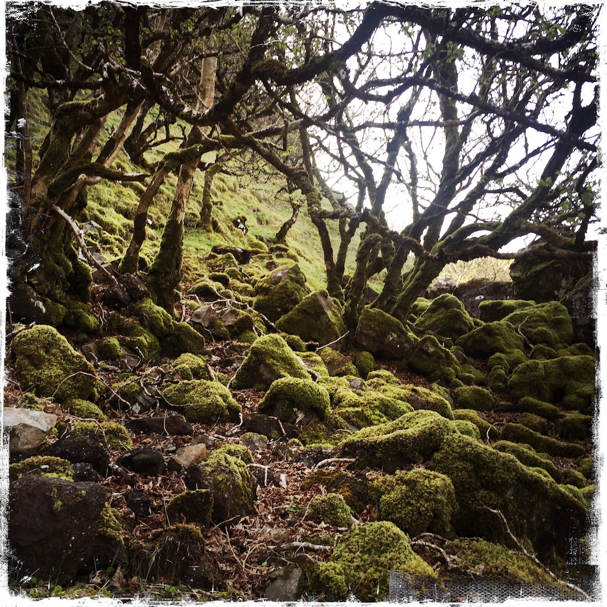 Forest at Fairy Glen, Isle of Skye, Scotland, photo by Barbara Sinclair