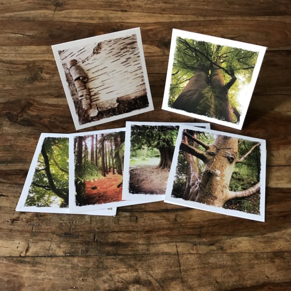 Barbara Sinclair I love trees Multipack Note Cards Healing Gifts