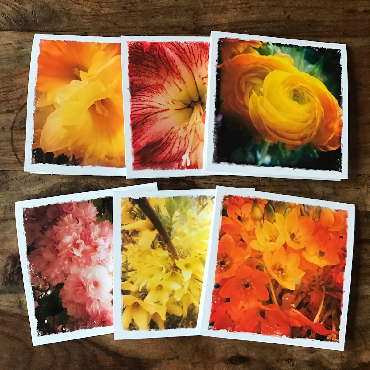 Spring Flowers Multipack, Photographs by Barbara Sinclair