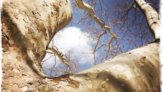 Lean Against a Tree and Let Nature Heal You, Barbara Sinclair Holistic Health & Healing