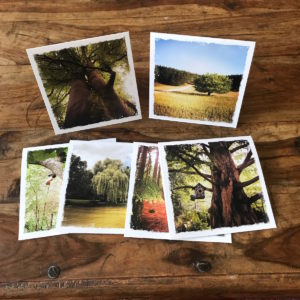 For the Trees Multipack Note Cards, Photos by Barbara Sinclair