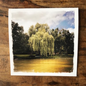 Willow Tree Note Card, Photo by Barbara Sinclair