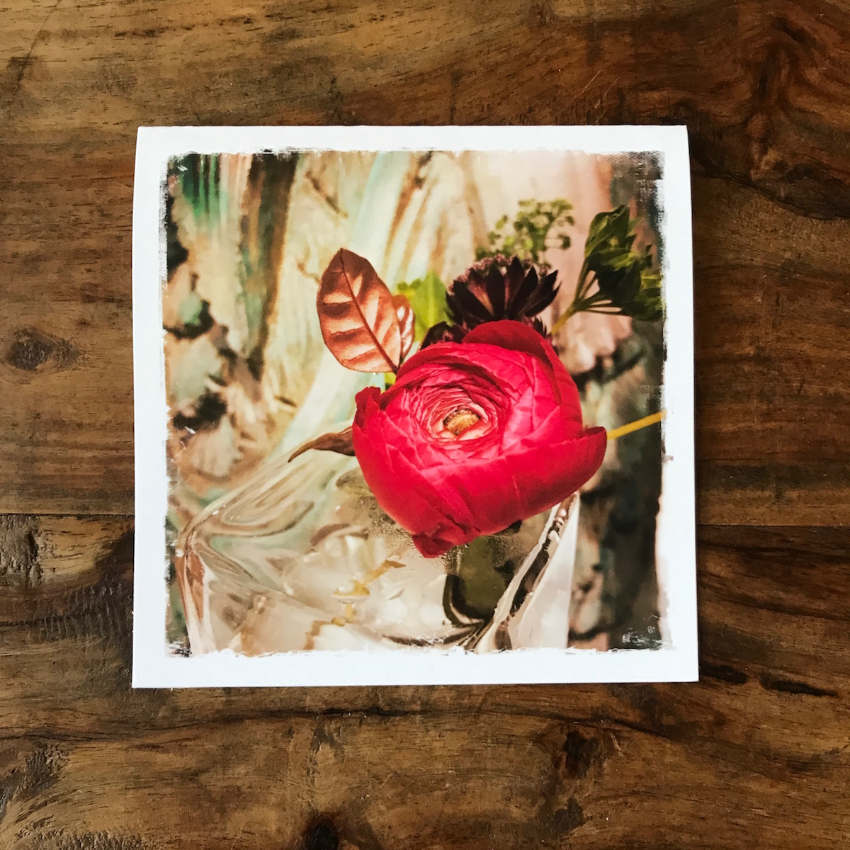Pink Ranunculus Note Card, photo by Barbara Sinclair