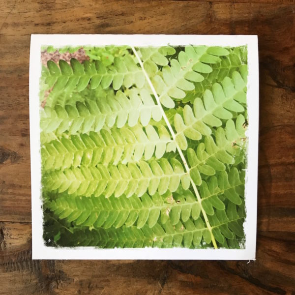 Forest Fern Note Cards, photo by Barbara Sinclair