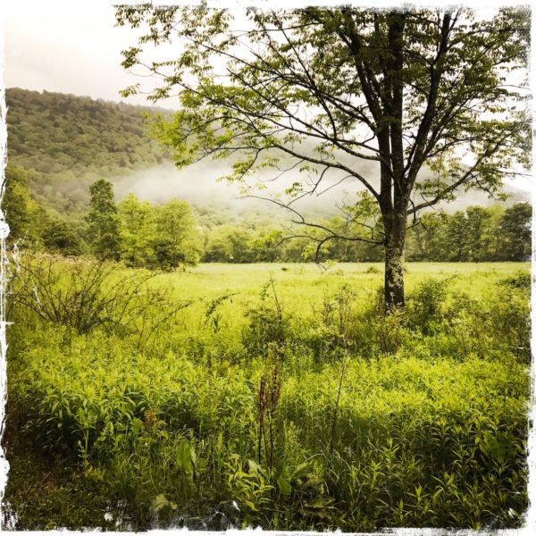 Morning Fog in the Catskills, photo by Barbara Sinclair