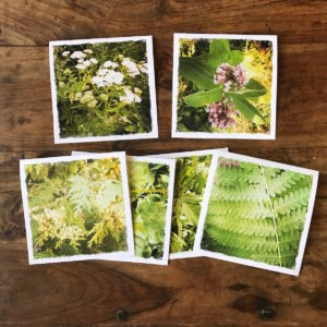Plant Lovers Multipack Note Cards, photos by Barbara Sinclair