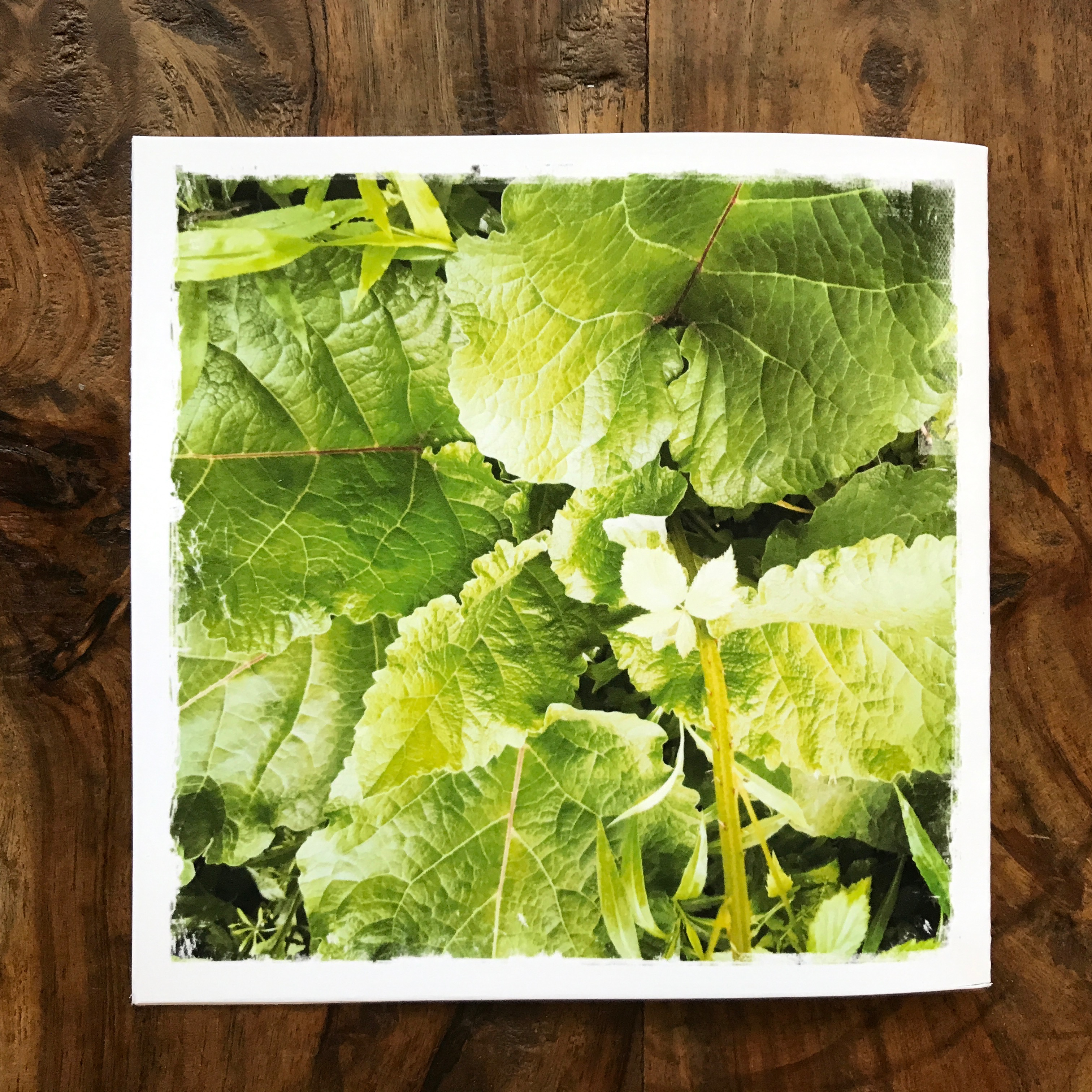 Burdock Note Card, photo by Barbara Sinclair